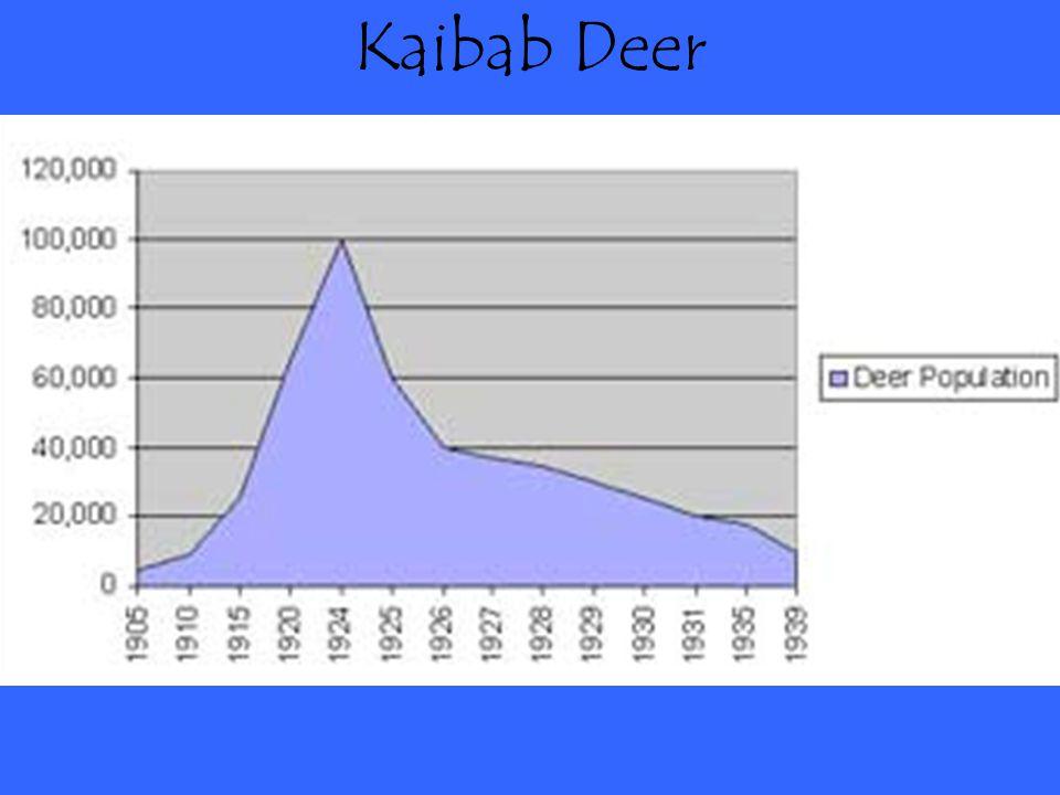 Kaibab Deer