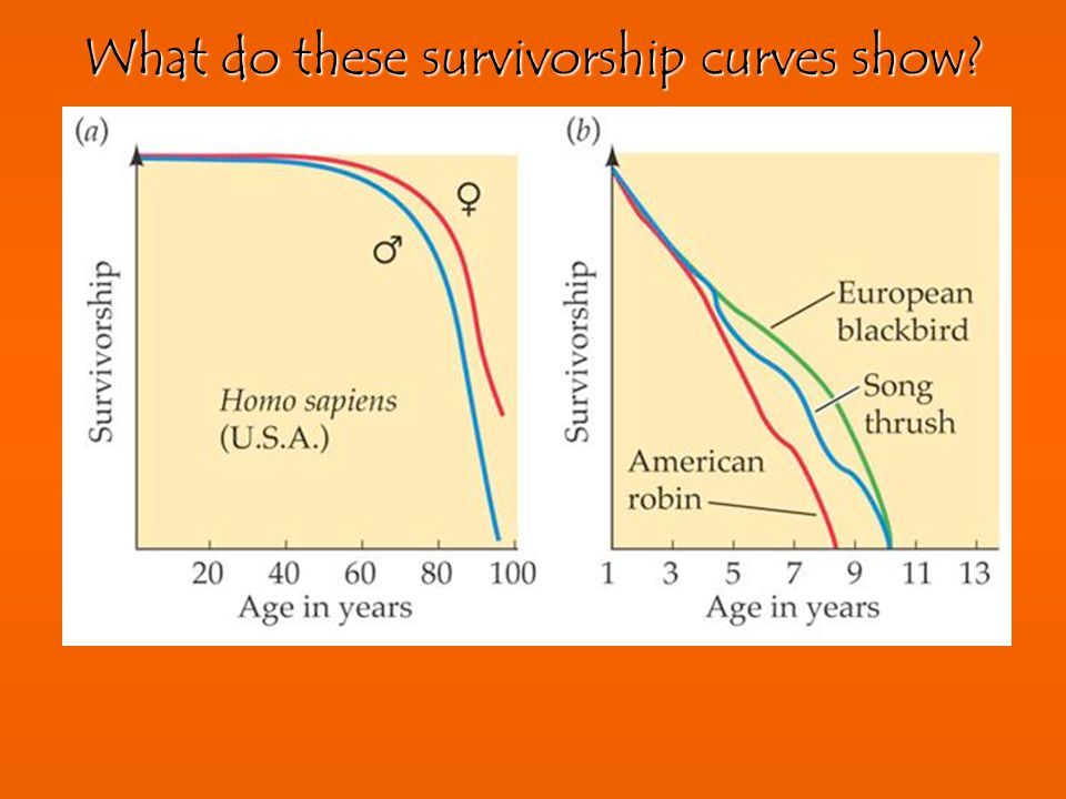 What do these survivorship curves show