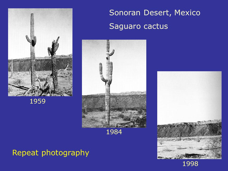 Sonoran Desert, Mexico Saguaro cactus Repeat photography 1959 1984