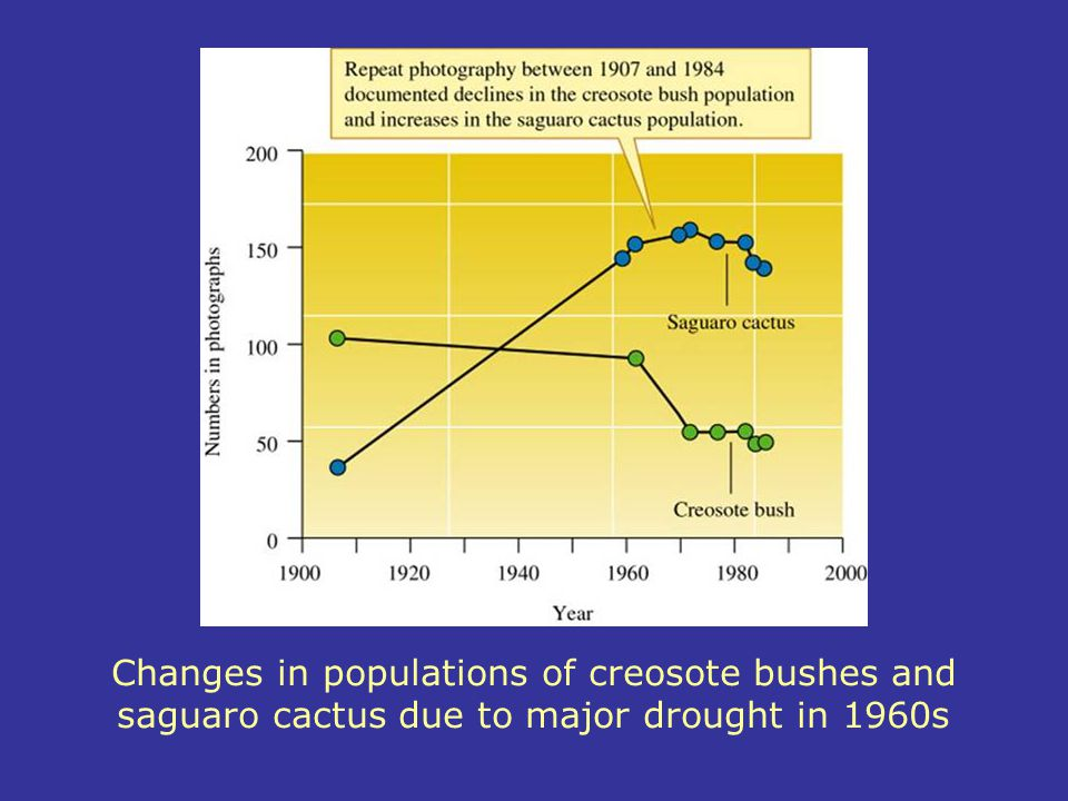 Changes in populations of creosote bushes and saguaro cactus due to major drought in 1960s
