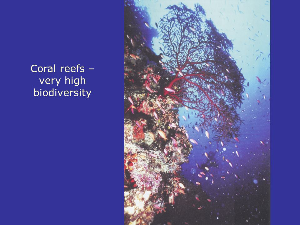 Coral reefs – very high biodiversity