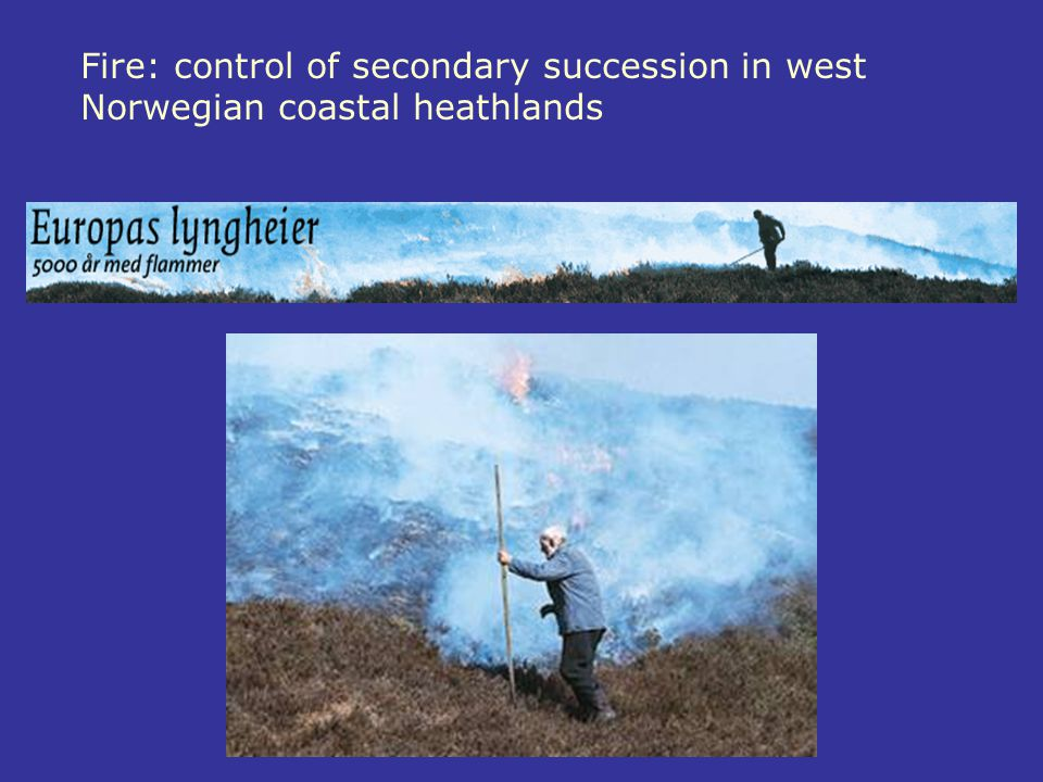 Fire: control of secondary succession in west Norwegian coastal heathlands
