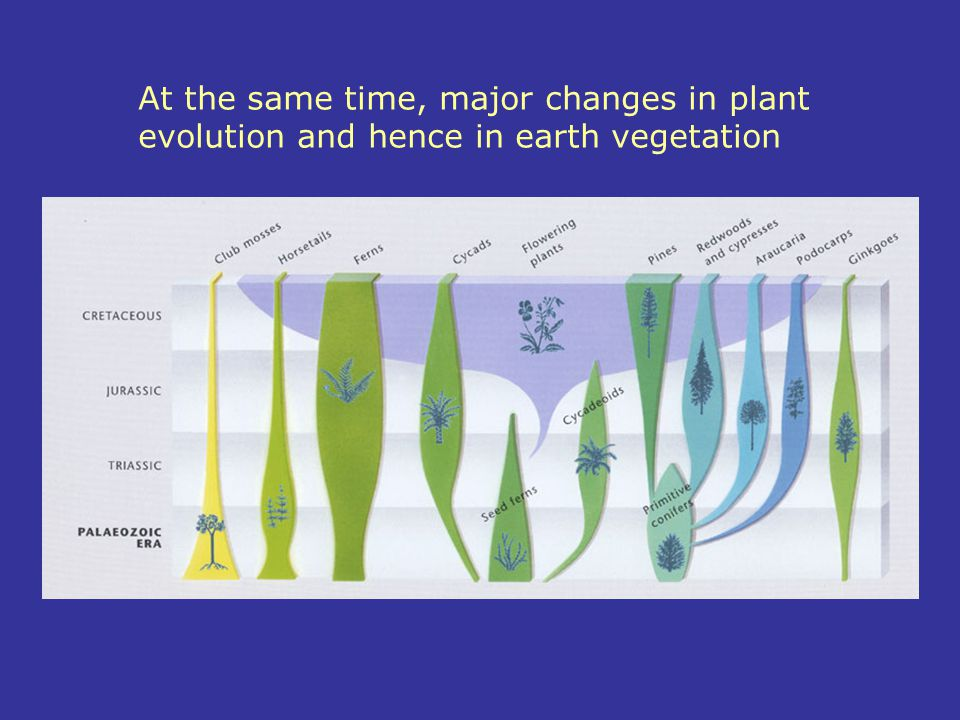 At the same time, major changes in plant evolution and hence in earth vegetation