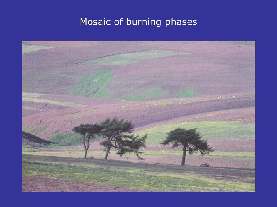 Mosaic of burning phases