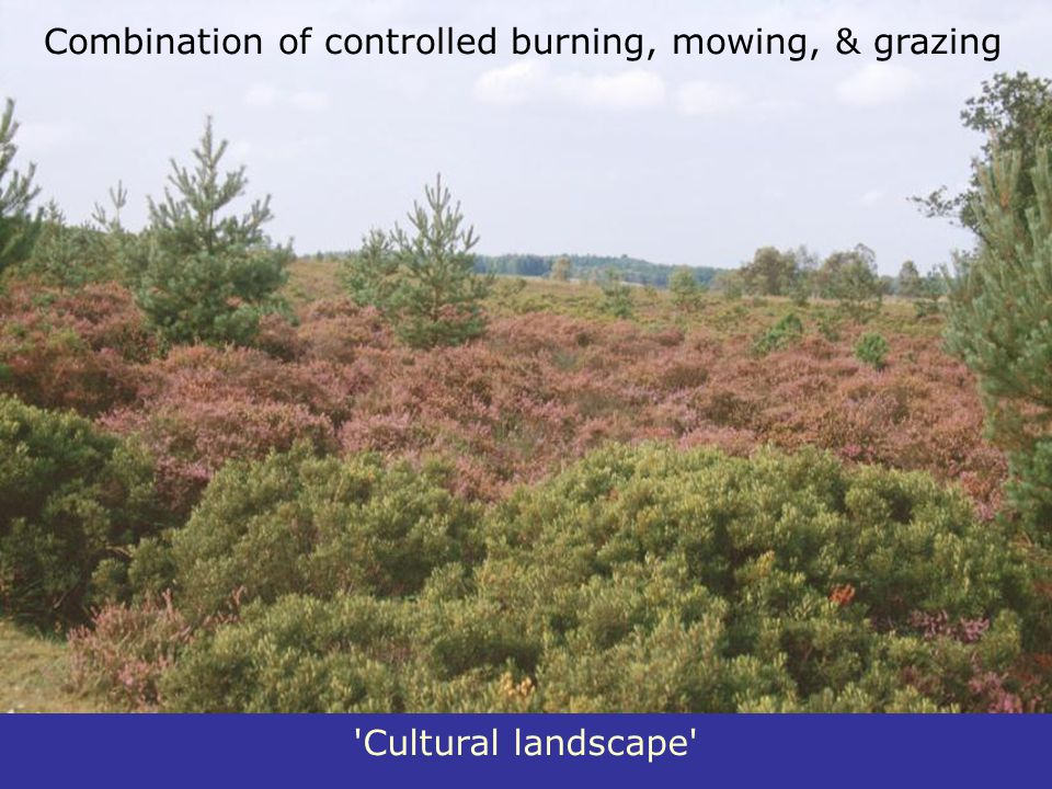 Combination of controlled burning, mowing, & grazing