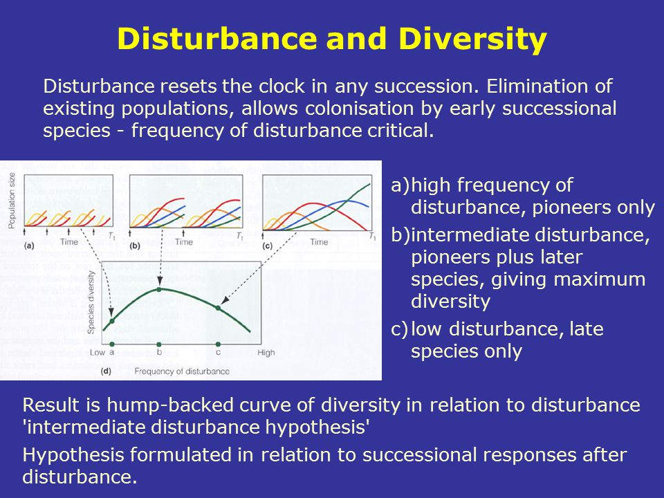 Disturbance and Diversity