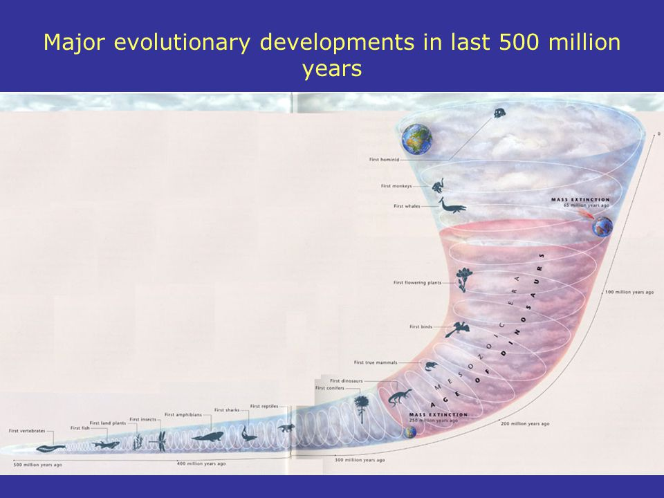 Major evolutionary developments in last 500 million years