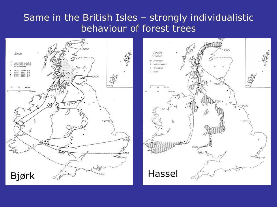 Same in the British Isles – strongly individualistic behaviour of forest trees