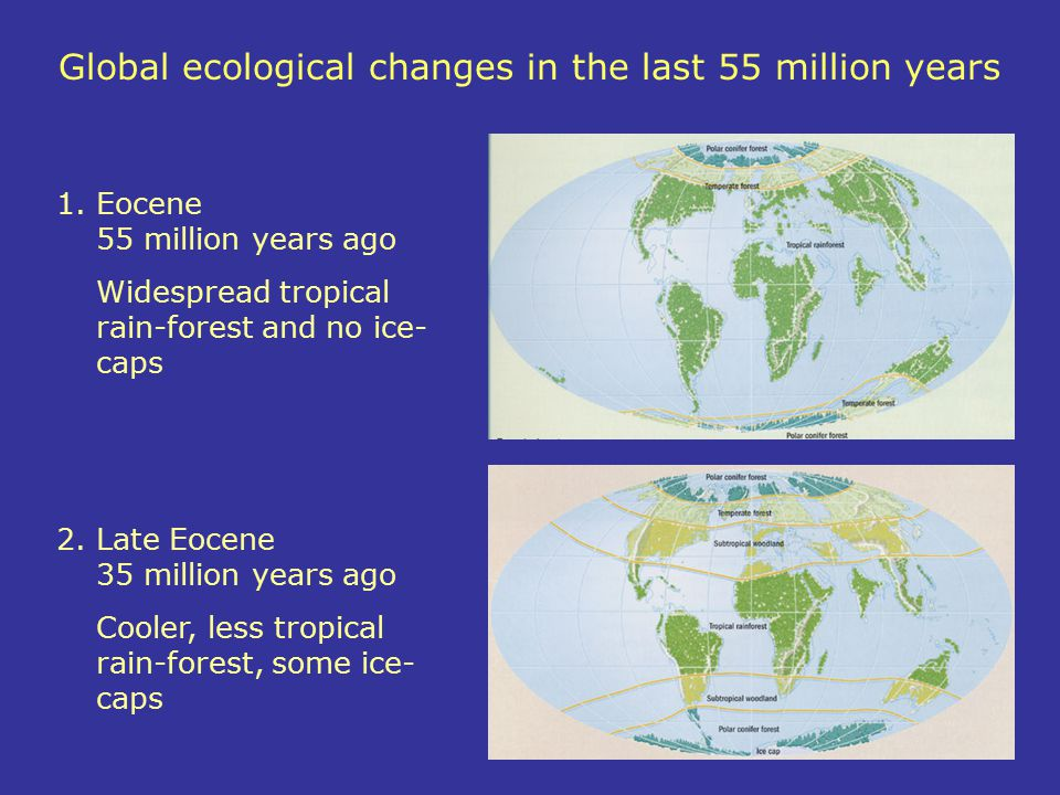 Global ecological changes in the last 55 million years