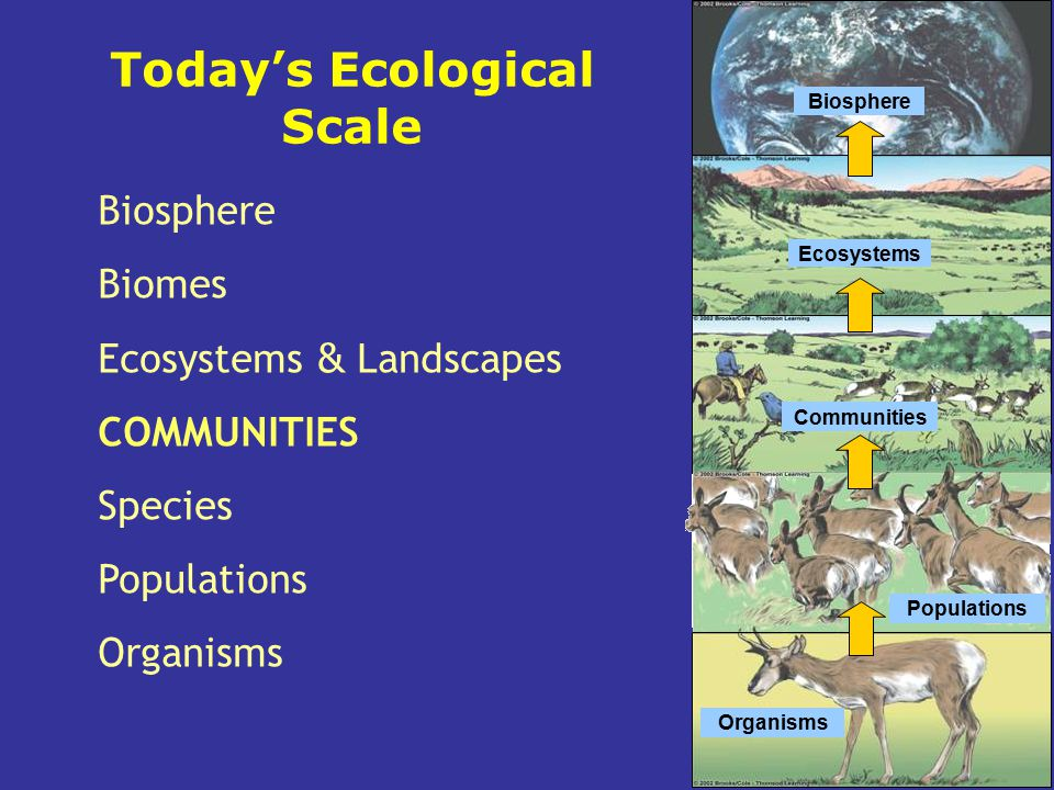 Today's Ecological Scale