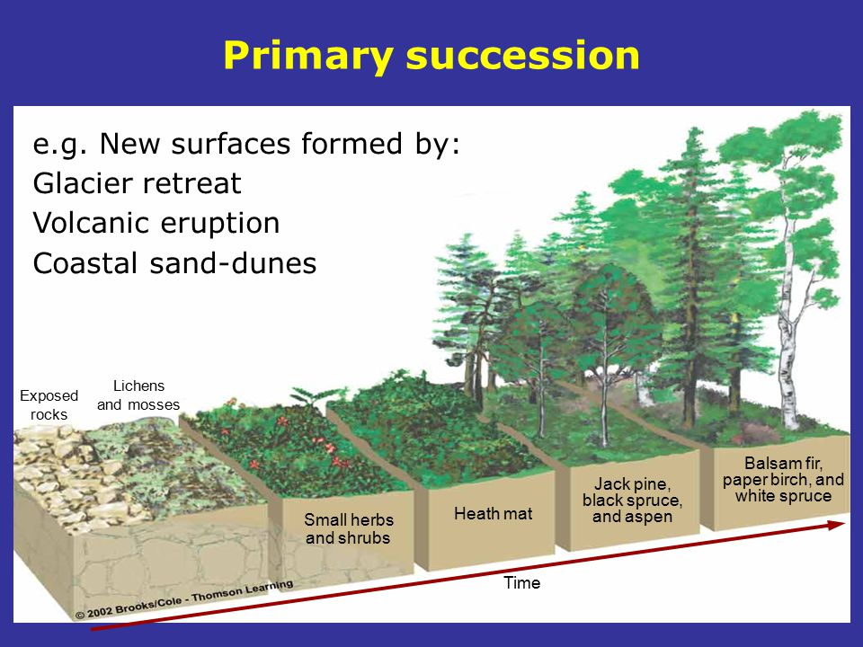 Primary succession e.g. New surfaces formed by: Glacier retreat Volcanic eruption Coastal sand-dunes.