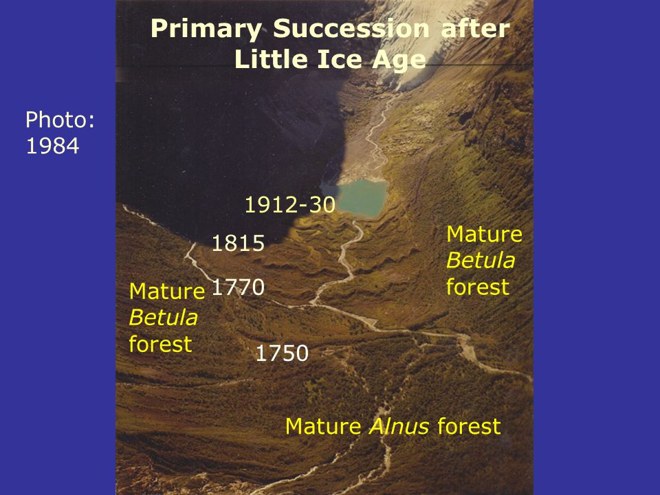 Primary Succession after Little Ice Age