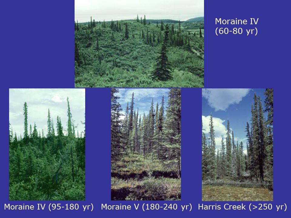Moraine IV (60-80 yr) Moraine IV (95-180 yr) Moraine V (180-240 yr)
