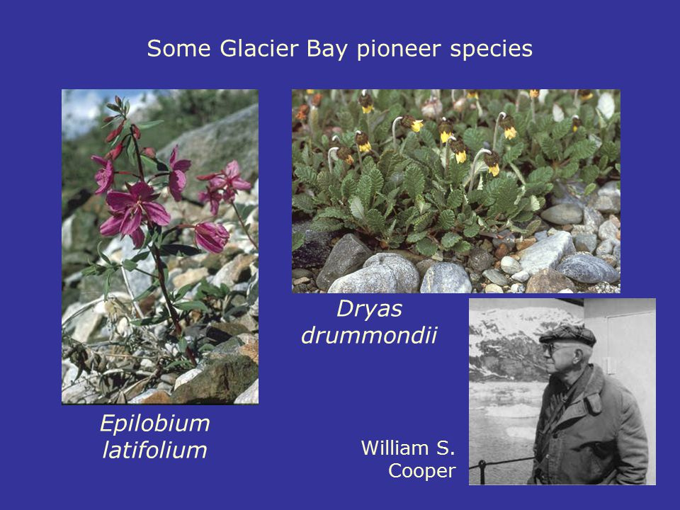 Some Glacier Bay pioneer species