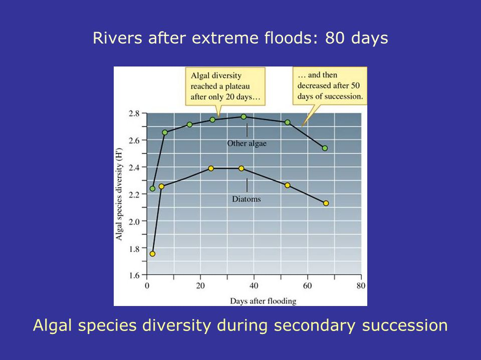 Rivers after extreme floods: 80 days