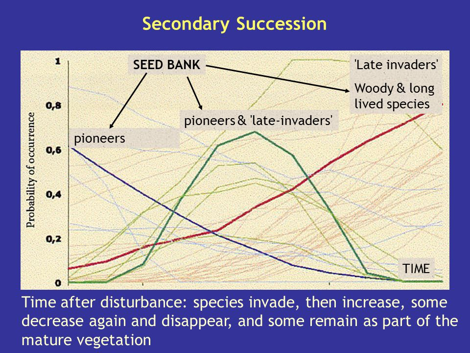 Secondary Succession SEED BANK. Late invaders Woody & long lived species. pioneers & late-invaders