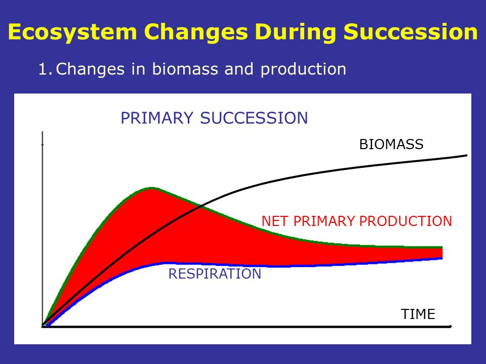 Ecosystem Changes During Succession