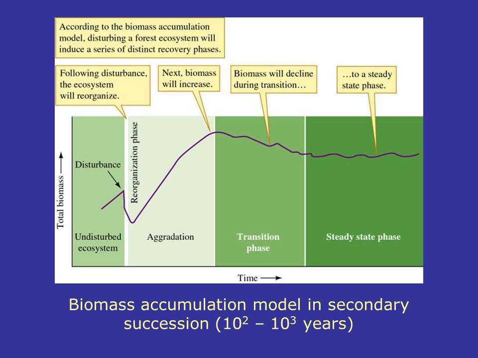 Biomass accumulation model in secondary succession (102 – 103 years)
