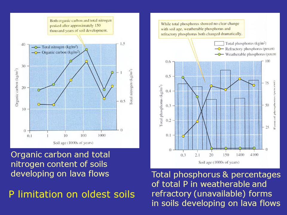 P limitation on oldest soils