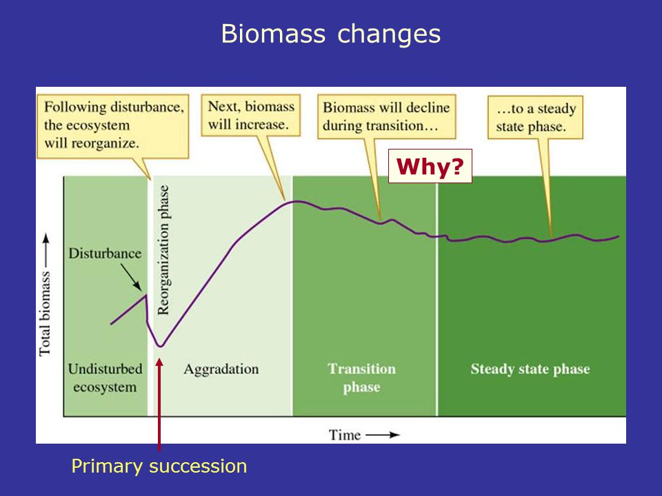 Biomass changes Why Primary succession