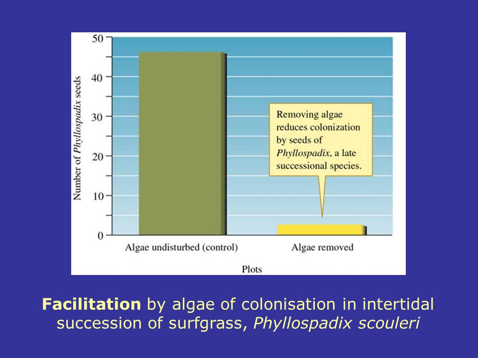 Facilitation by algae of colonisation in intertidal succession of surfgrass, Phyllospadix scouleri
