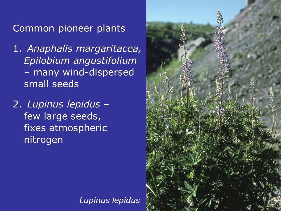 Lupinus lepidus – few large seeds, fixes atmospheric nitrogen