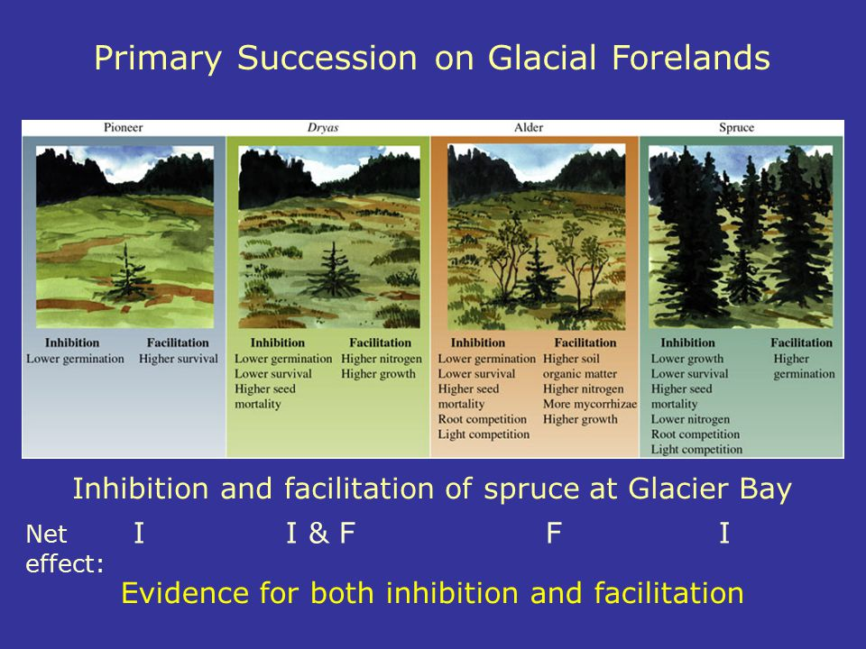 Primary Succession on Glacial Forelands