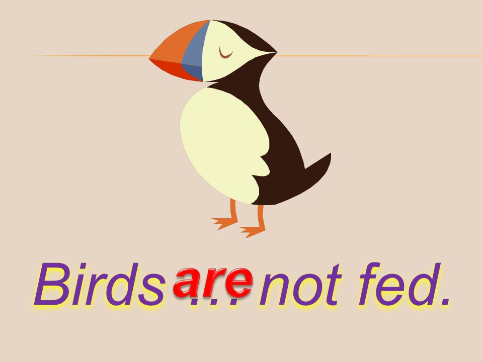 are Birds … not fed.