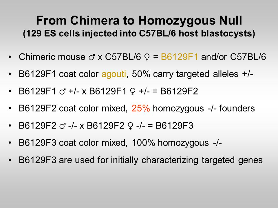 From Chimera to Homozygous Null (129 ES cells injected into C57BL/6 host blastocysts)