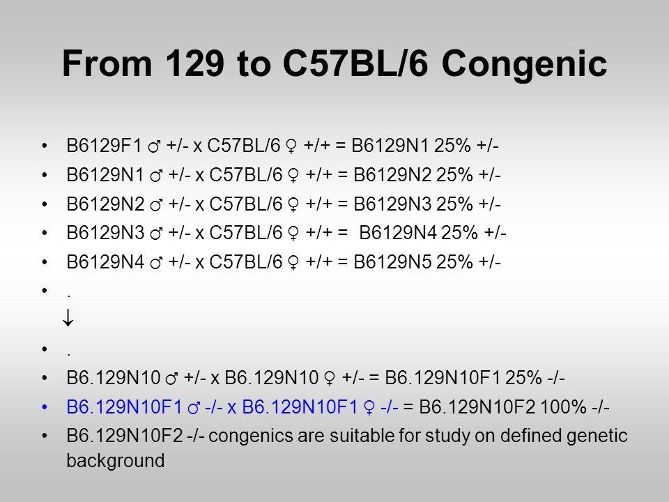 From 129 to C57BL/6 Congenic B6129F1 ♂ +/- x C57BL/6 ♀ +/+ = B6129N1 25% +/- B6129N1 ♂ +/- x C57BL/6 ♀ +/+ = B6129N2 25% +/-
