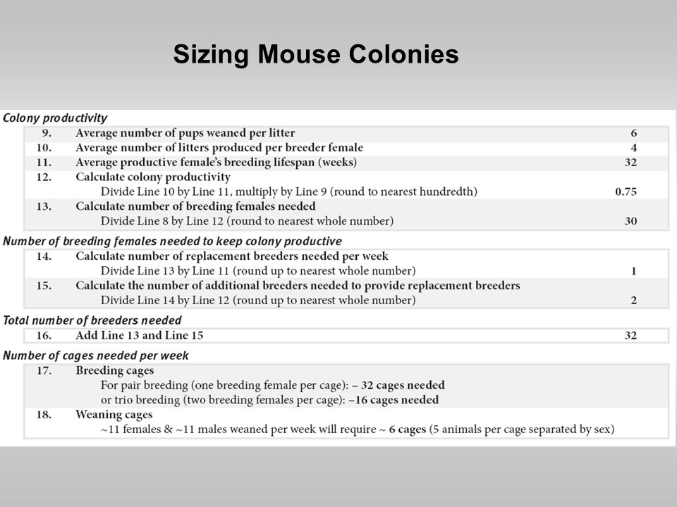 Sizing Mouse Colonies