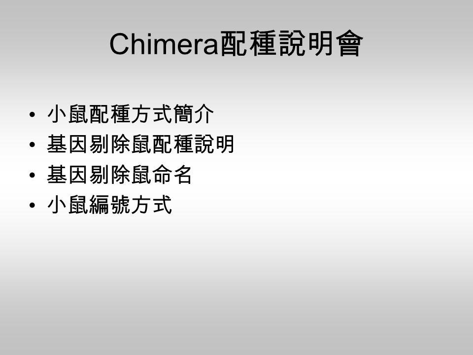 Chimera配種說明會 小鼠配種方式簡介 基因剔除鼠配種說明 基因剔除鼠命名 小鼠編號方式