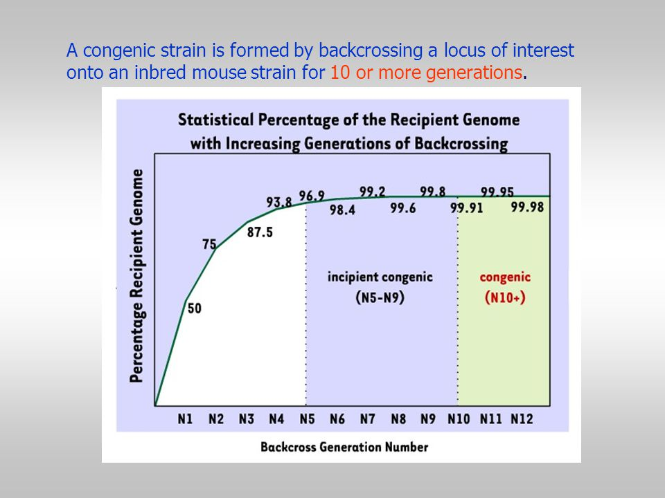 A congenic strain is formed by backcrossing a locus of interest onto an inbred mouse strain for 10 or more generations.