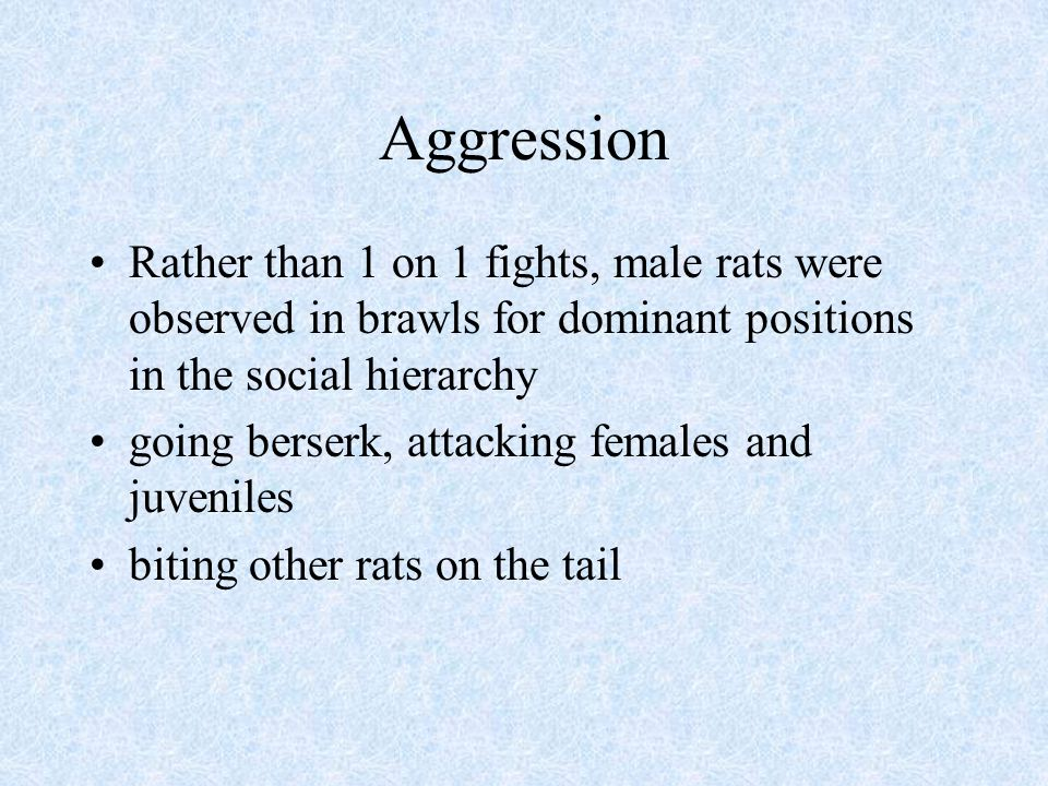Aggression Rather than 1 on 1 fights, male rats were observed in brawls for dominant positions in the social hierarchy.