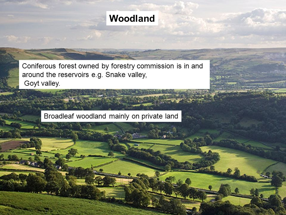 Woodland Coniferous forest owned by forestry commission is in and