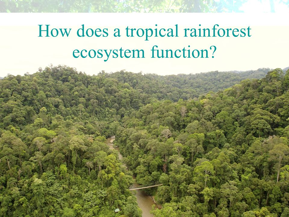 How does a tropical rainforest ecosystem function