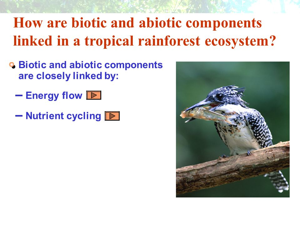 How are biotic and abiotic components linked in a tropical rainforest ecosystem