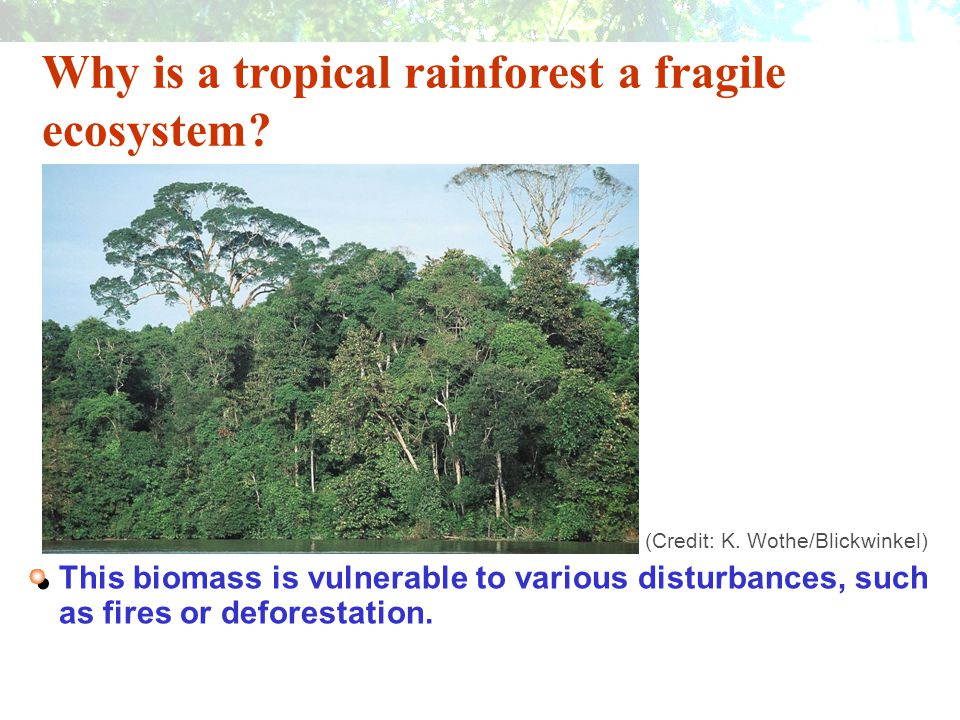 Why is a tropical rainforest a fragile ecosystem