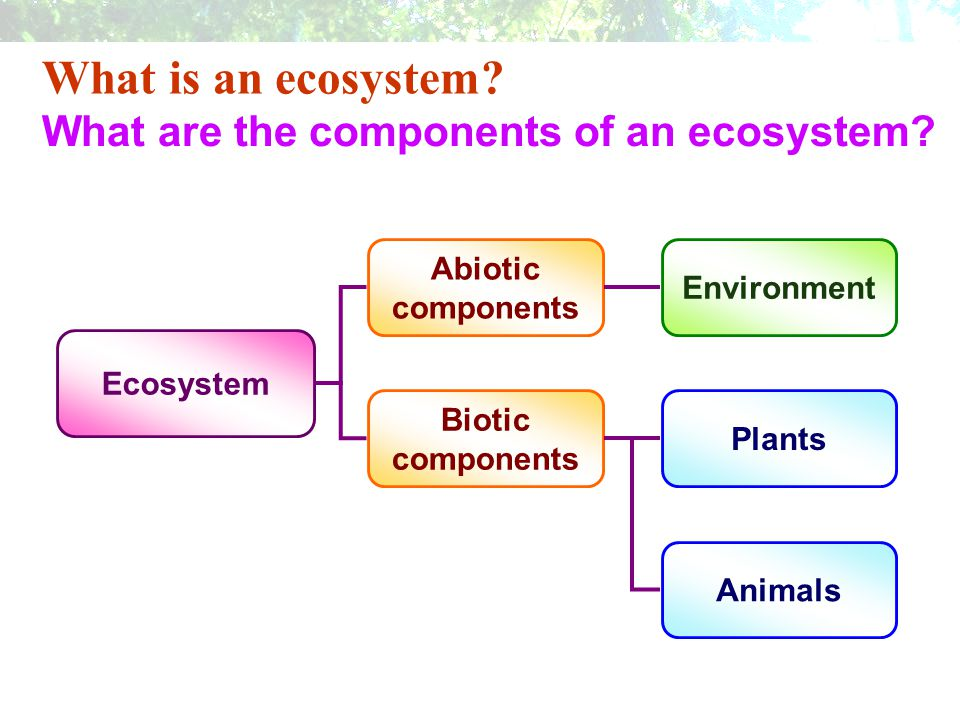 What is an ecosystem What are the components of an ecosystem