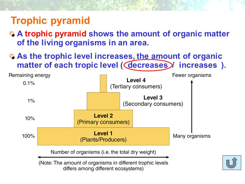 Trophic pyramid A trophic pyramid shows the amount of organic matter of the living organisms in an area.