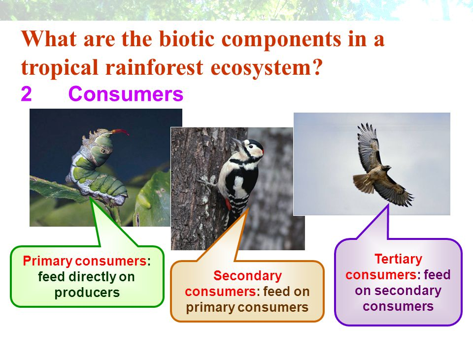 What are the biotic components in a tropical rainforest ecosystem