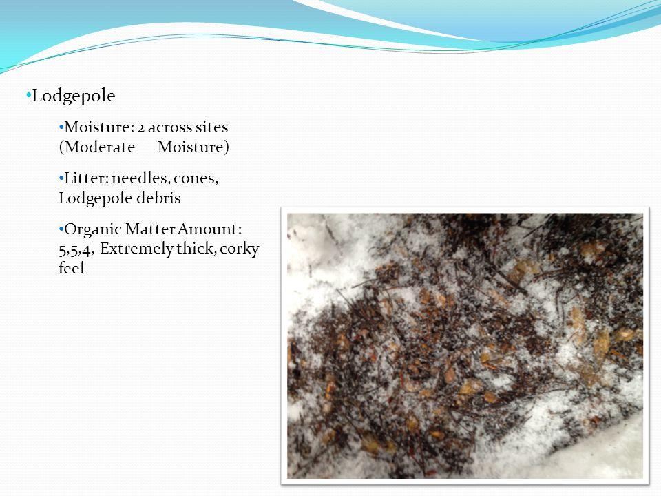 Lodgepole Moisture: 2 across sites (Moderate Moisture)