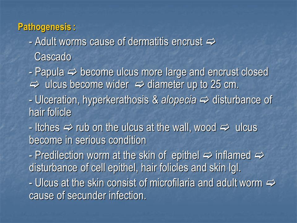 - Ulceration, hyperkerathosis & alopecia  disturbance of hair folicle