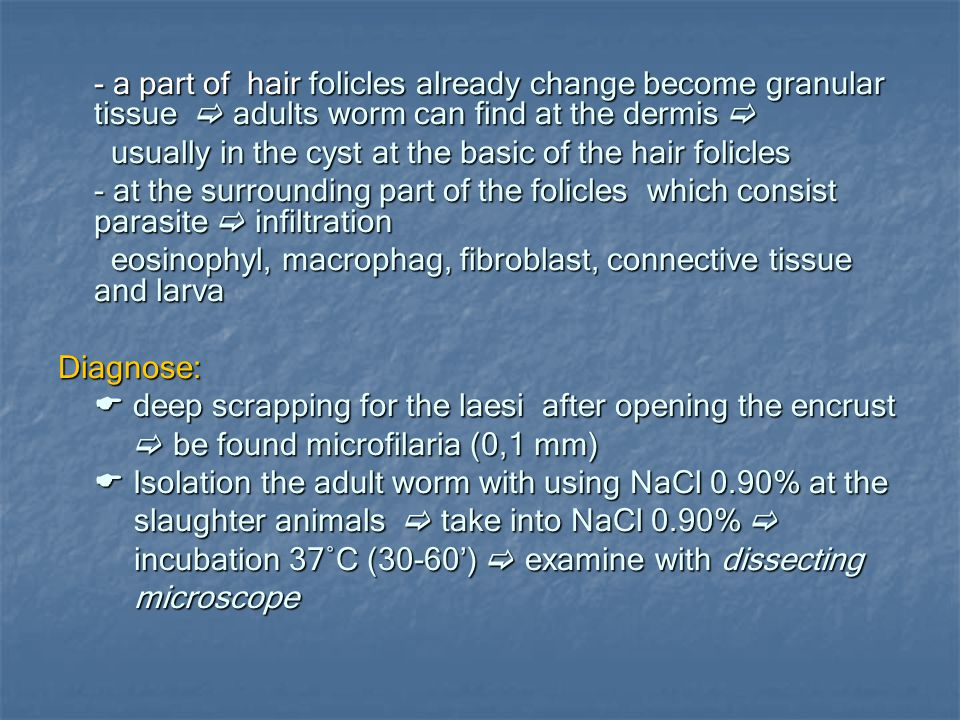 - a part of hair folicles already change become granular tissue  adults worm can find at the dermis 