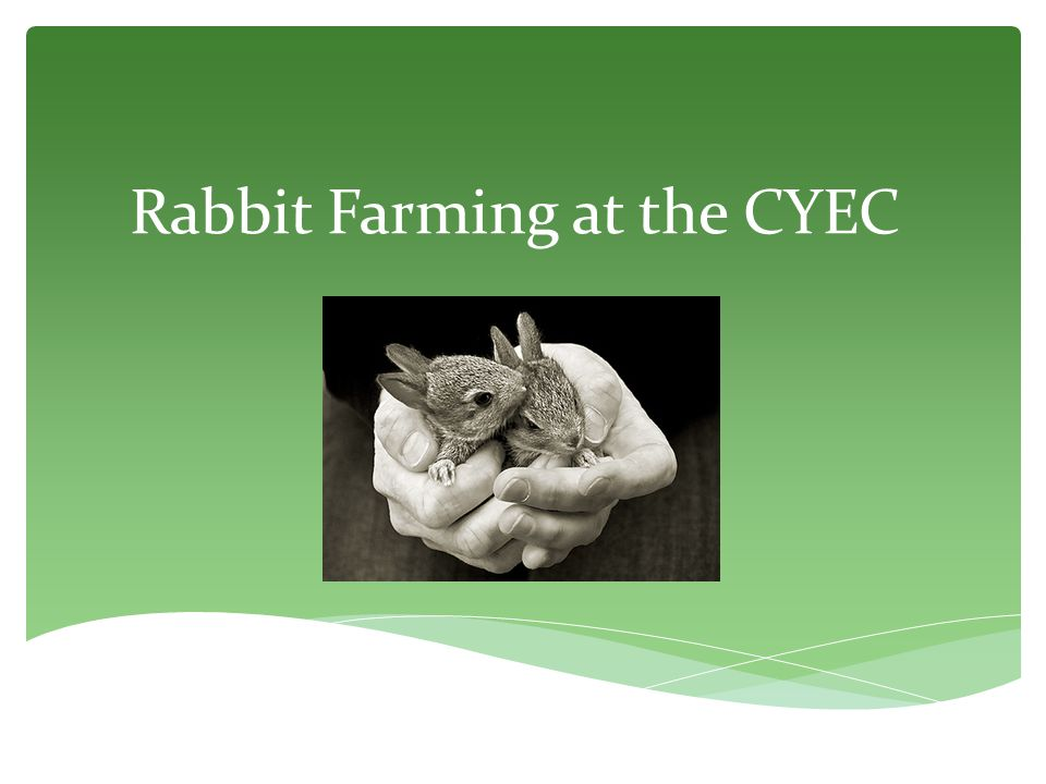 Rabbit Farming at the CYEC