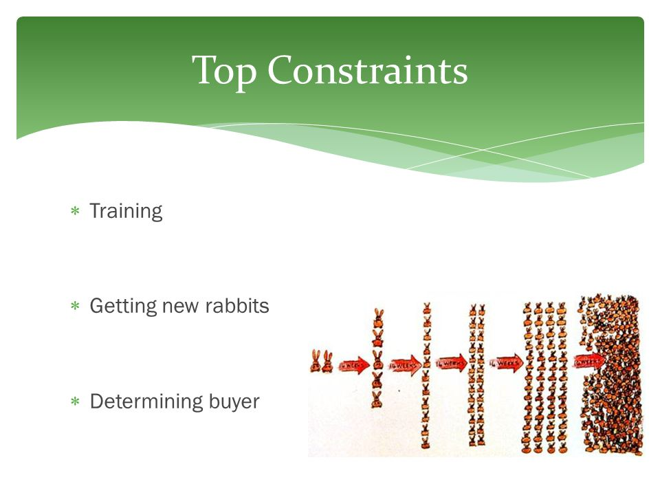 Top Constraints Training Getting new rabbits Determining buyer
