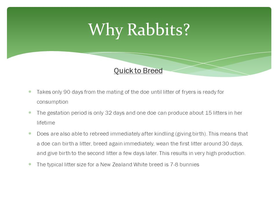 Why Rabbits Quick to Breed