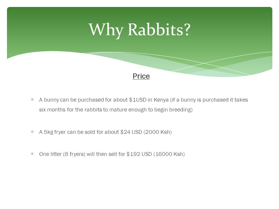 Why Rabbits Price.