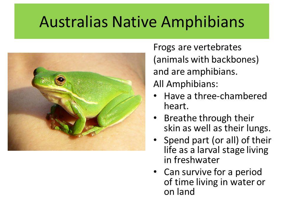 Australias Native Amphibians