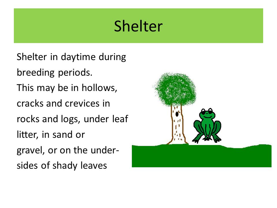 Shelter Shelter in daytime during breeding periods.